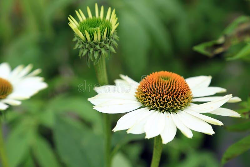 Summerflowers bonitos fotografia de stock royalty free