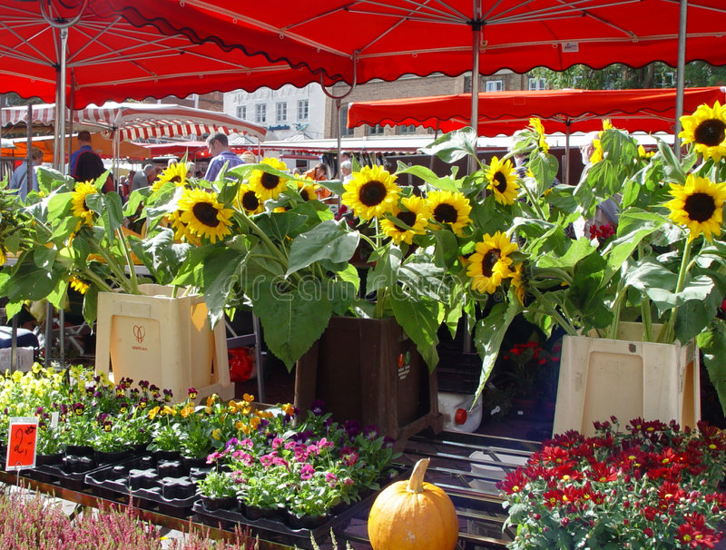 Download Summermarket stock image. Image of town, sunflowers, flower - 17509