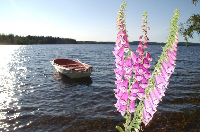 Summernight bij meer Het bloemvingerhoedskruid in voorgrond en meer met het roeien van boot stock afbeelding
