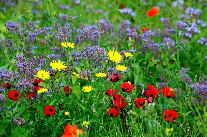 Summers colourful meadow stock photos