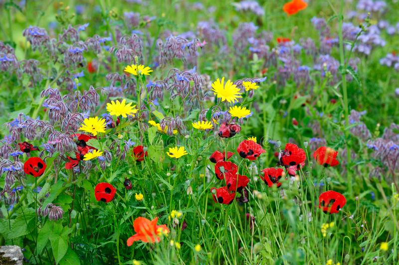 Summers colourful meadow royalty free stock photo