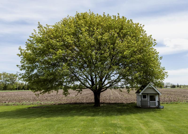 Summers day tree and dog house stock images
