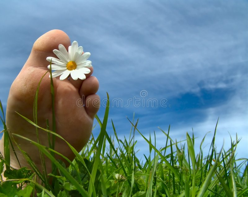 Summertime!. Foot with daisy in a green field and blue summer sky