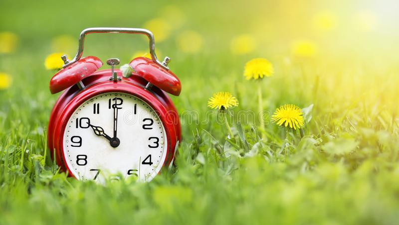 Summertime banner - alarm clock and dandelion flowers royalty free stock photo