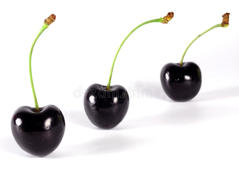 Summertime: black cherry stock photography