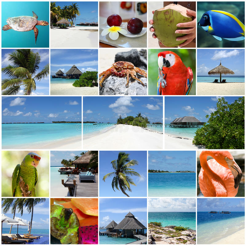 Summertime collage. royalty free stock photography