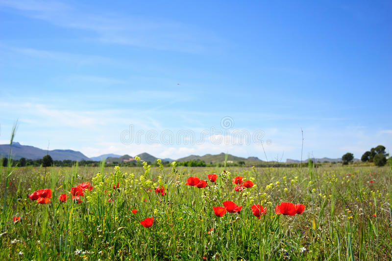 Download Summertime with poppies stock photo. Image of ecological - 9862486