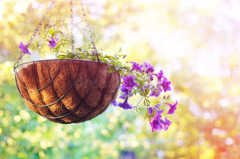 summertime Priorità bassa della natura immagini stock libere da diritti