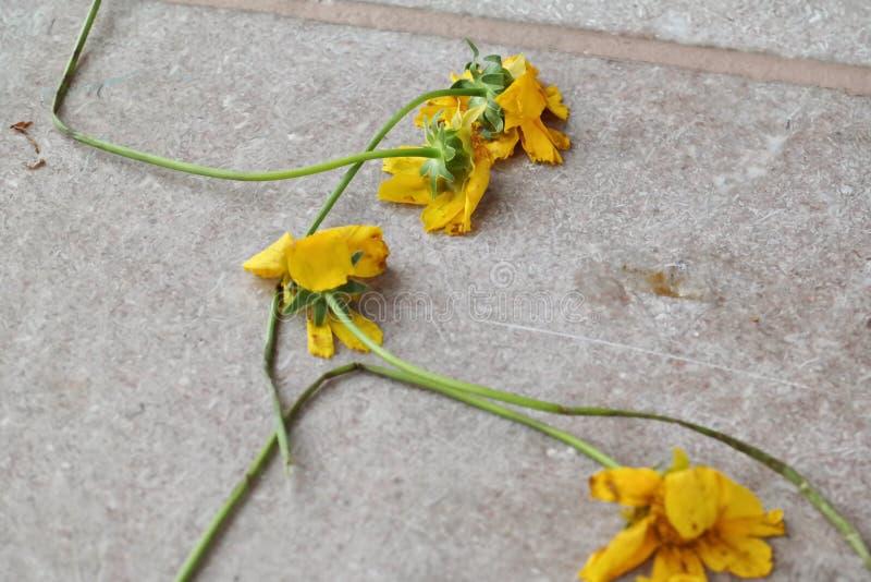 Summertime sadness royalty free stock photo