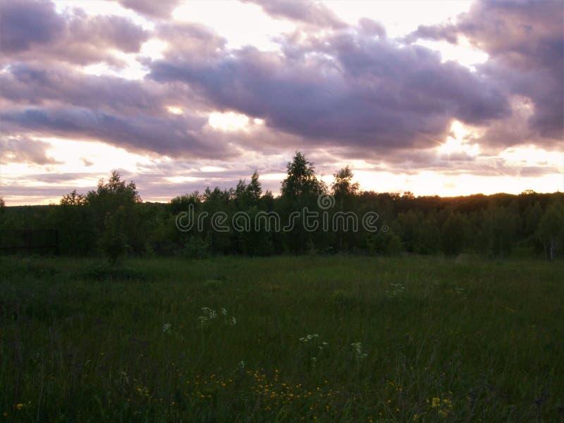 summertime Tramonto di giugno sopra il campo e la foresta fotografie stock