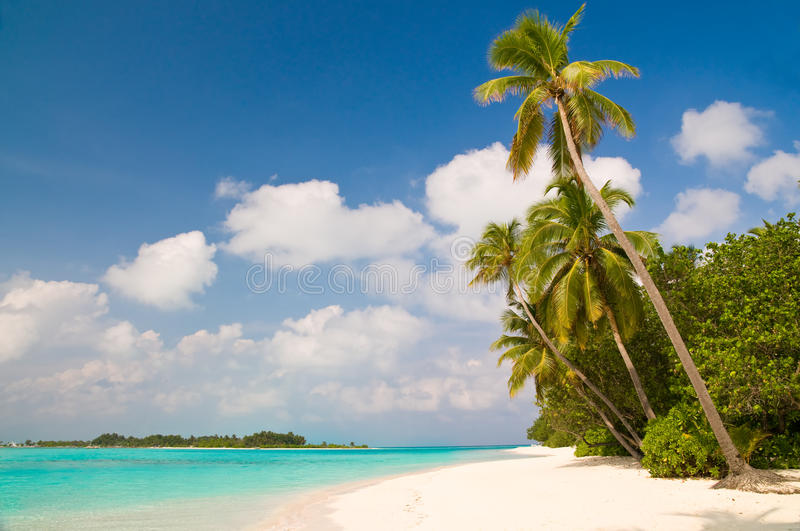 Download Summertime At A Tropical Beach Stock Image - Image: 9564319