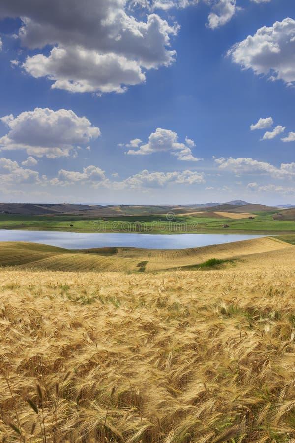 Summetime jordbruk Lantligt sommarlandskap av Italien Mellan Apulia och Basilicata: bergig bygd med vetefält royaltyfri foto