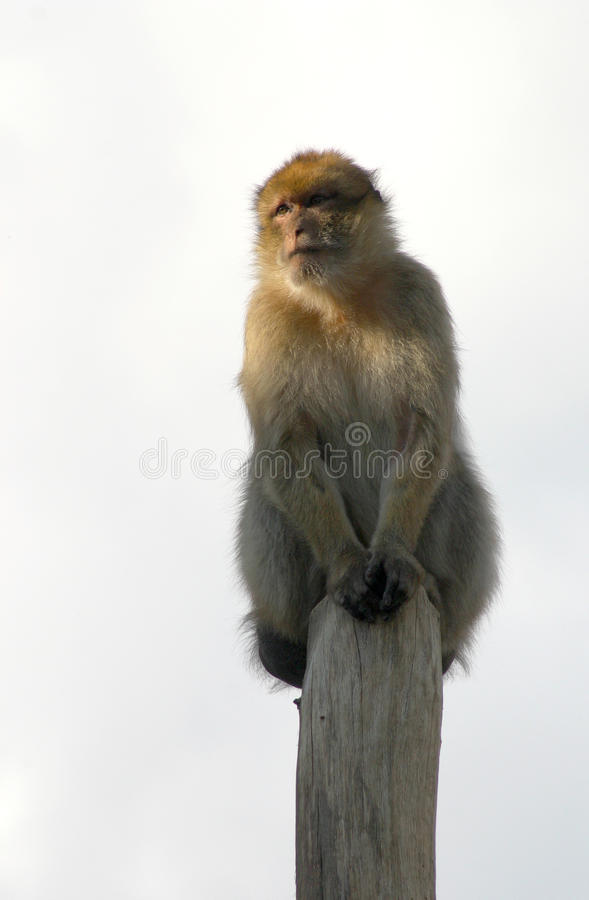 Download Summit stock photo. Image of quiet, background, mammal - 10487212
