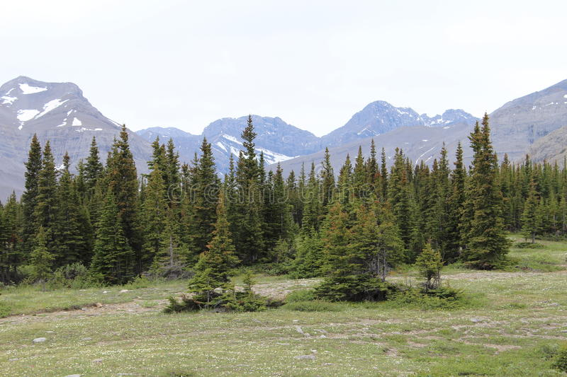 Summit Of The Continental Divide In Alberta royalty free stock images