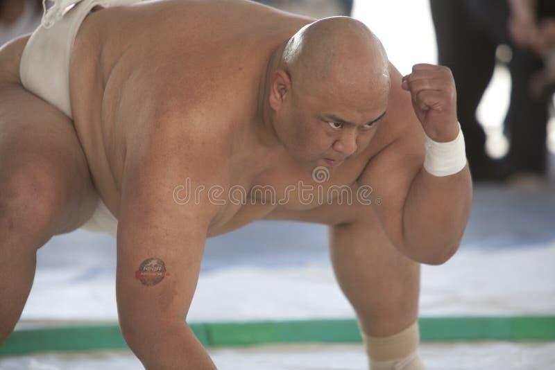 Sumo stock afbeelding