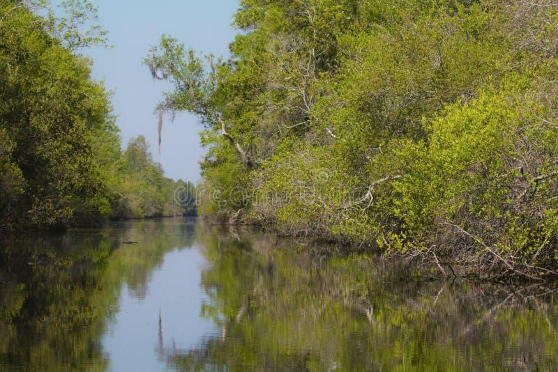 Sumpf stockfoto
