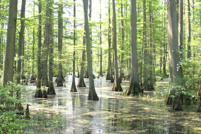 Sumpf stockfotos