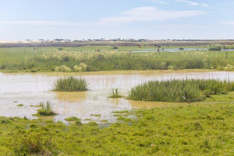 Sumpf auf einem Bauernhof in Lagoa tun Nationalpark Peixe lizenzfreie stockfotos