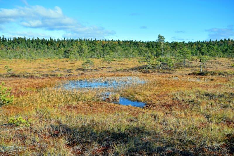 Sumpf auf Herbst stockbilder