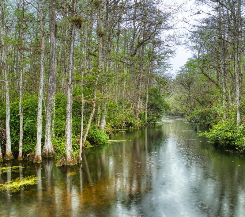 Sumpf in gro?er nationaler Konserve Zypresse, Florida, Vereinigte Staaten stockfotografie