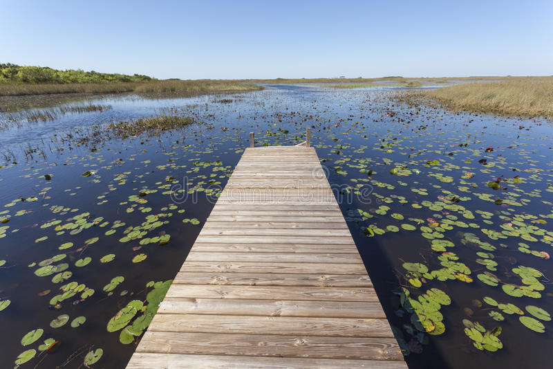 Sumpf im Everglades-Nationalpark, Florida stockfotografie