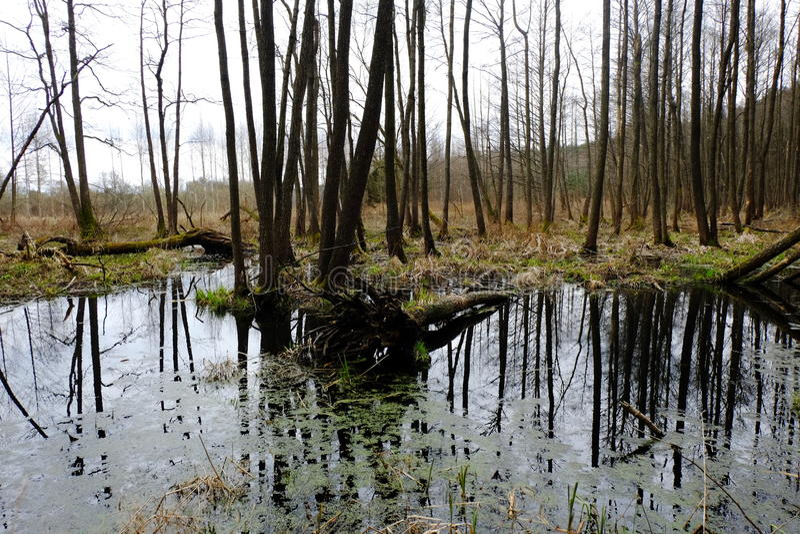 Sumpf im Frühjahr lizenzfreies stockfoto