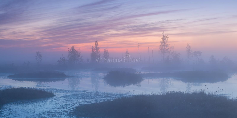 Sumpf morgens lizenzfreie stockbilder