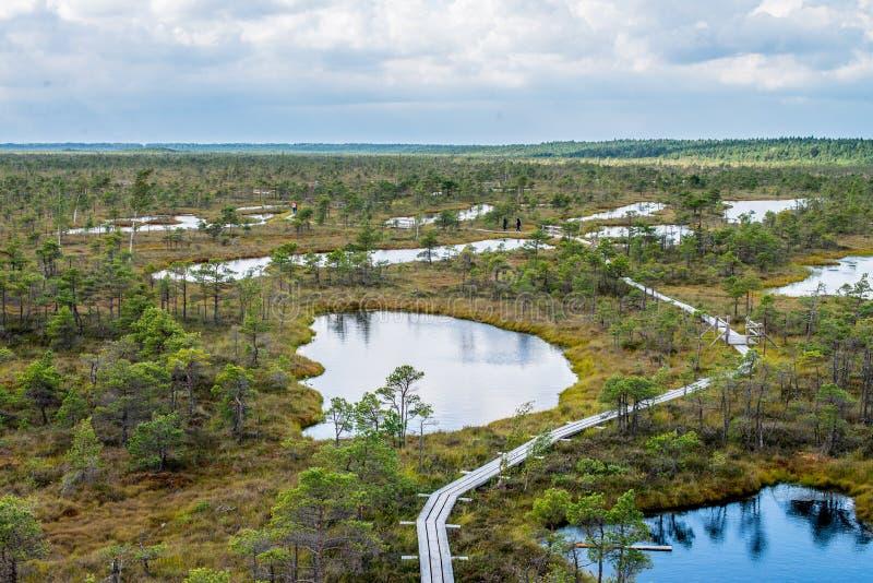 Sumpf-Spur lizenzfreies stockbild
