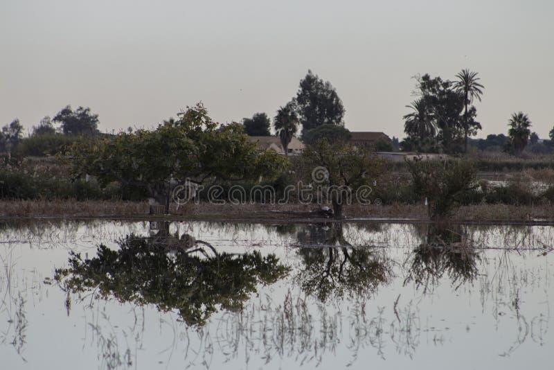 Sumpf in Valencia stockbilder