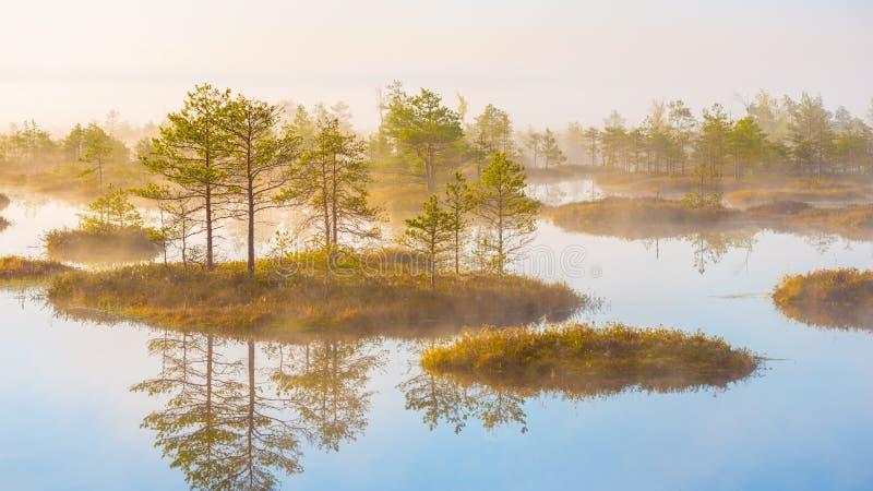 Sumpf Yelnya, Weißrussland stockfotografie
