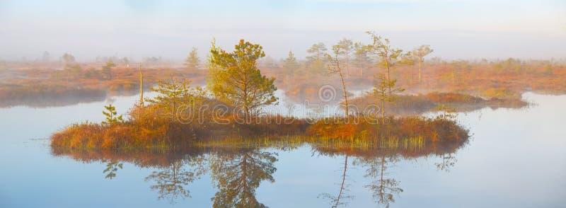 Sumpf Yelnya, Weißrussland lizenzfreie stockbilder