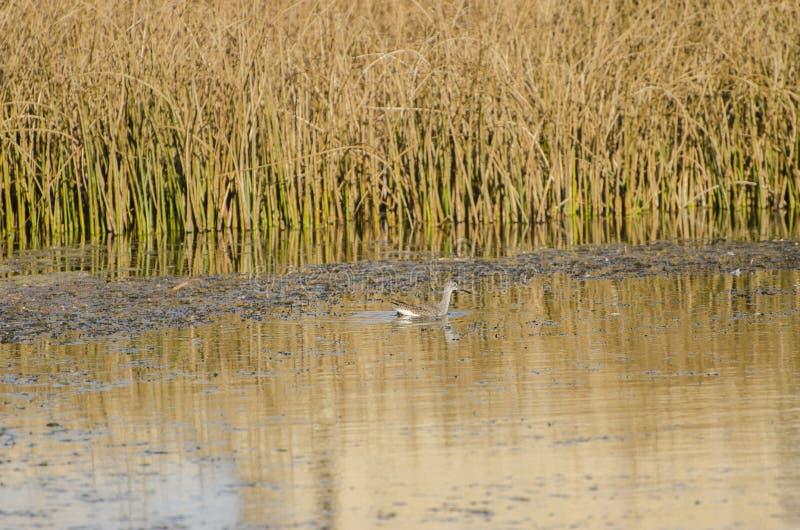 Sumpfgebiet-Ökosystem lizenzfreies stockfoto