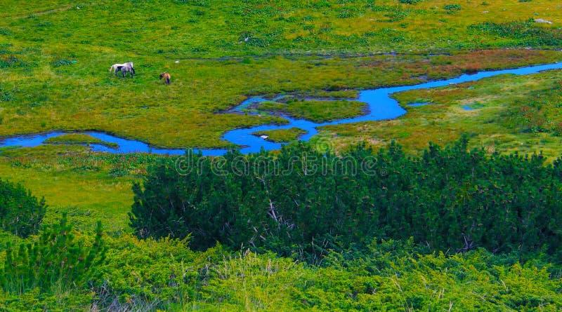 Sumpfgebiet mit einem Fluss stockbilder