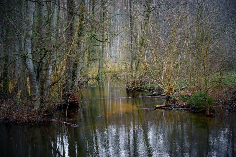 Sumpfgebiet mit Wasser, bloßen Bäumen und Buschwinter am Tal Hellbach oder Pinnau nahe Mölln, Deutschland, Landschaftslandschaft lizenzfreie stockfotos