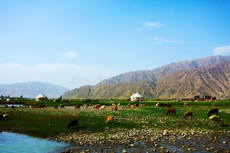Sumpfgebiet mit Ziegen und Kühen lizenzfreie stockfotografie