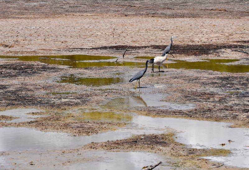 Tiere Im Sumpf