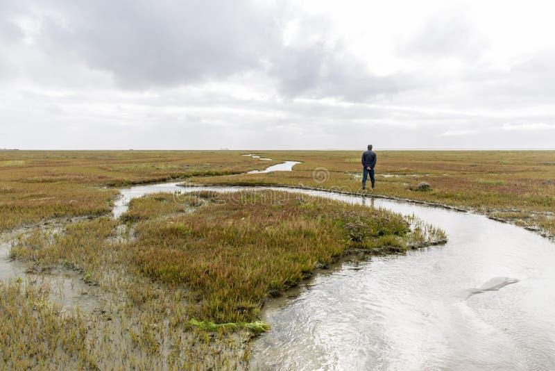 Sumpfgebiete auf einer Insel in den Niederlanden stockbild
