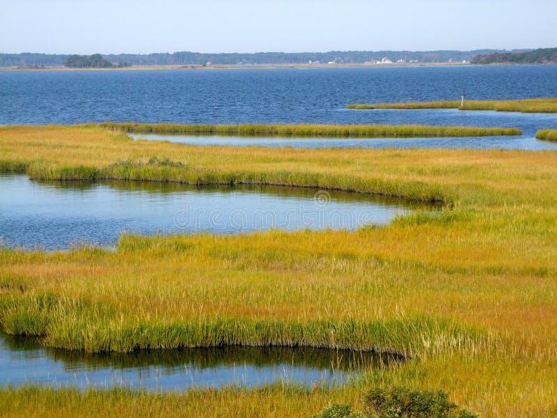Sumpfgebiete durch den Fluss lizenzfreie stockfotografie