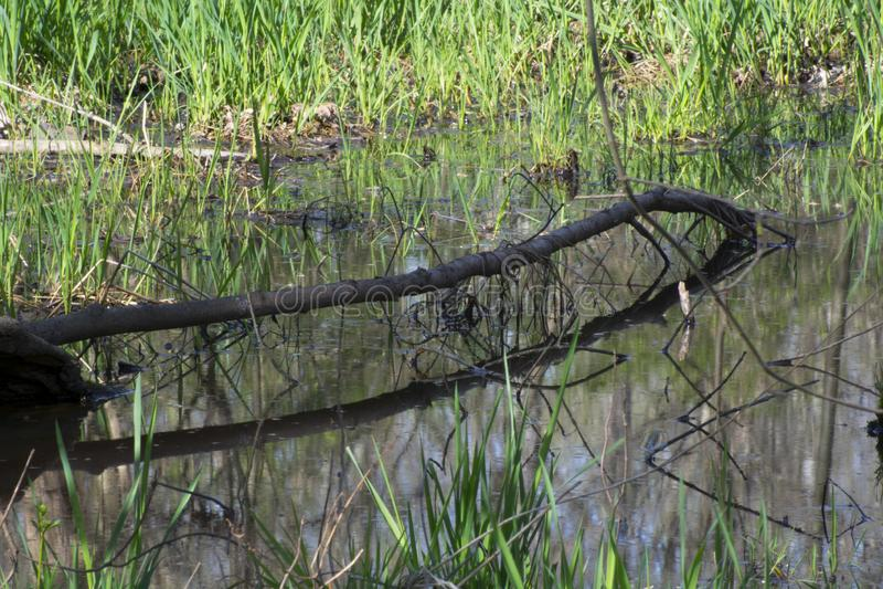 Sumpfgebiete im Vorfrühling stockfoto