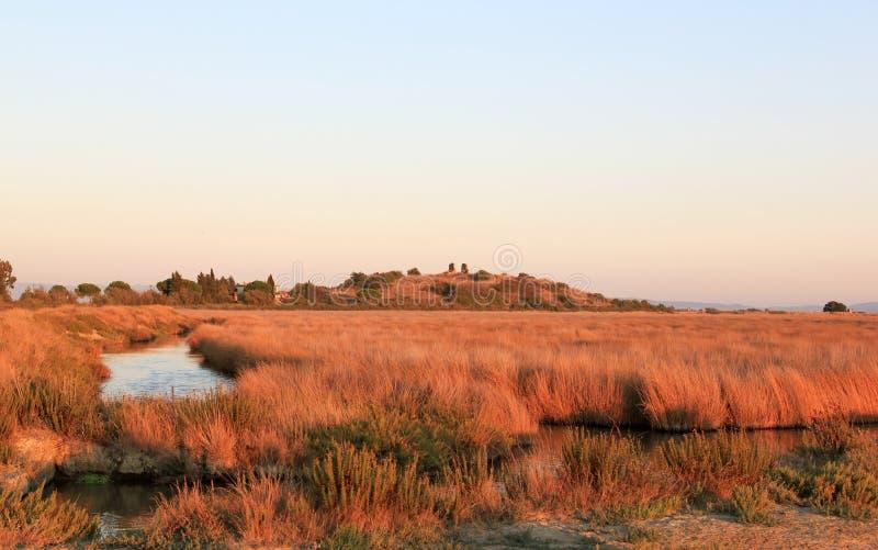 Sumpfgebiete von Castiglione della Pescaia, Italien stockbilder