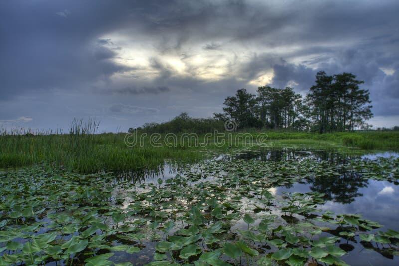 Sumpfgebietlandschaft stockfotografie