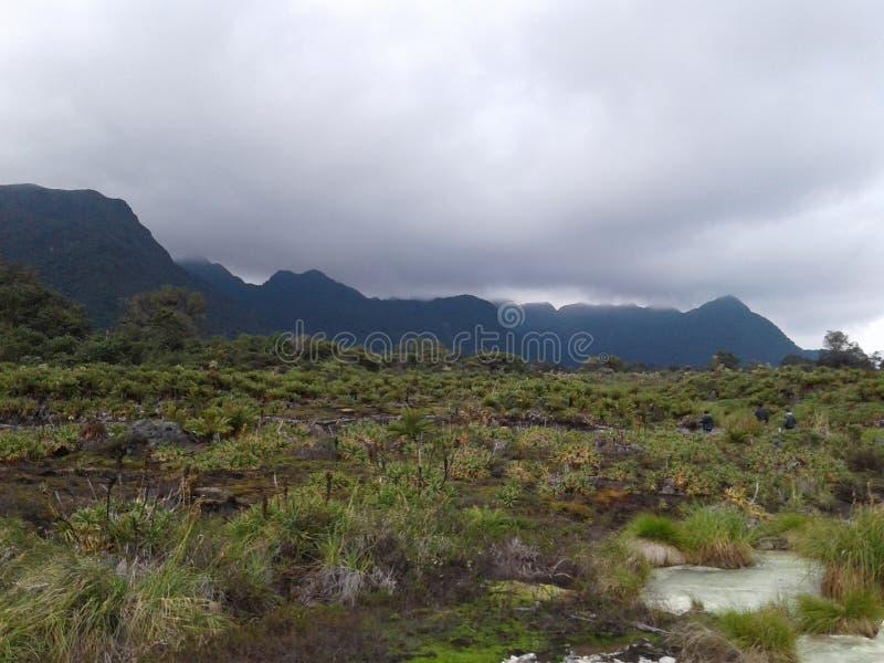 Sumpfgebietlandschaft Hangzhous xixi stockfoto
