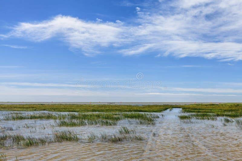Sumpfgebietpark lizenzfreies stockbild