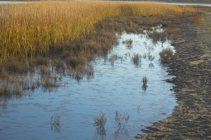Sumpfgräser bei Sonnenuntergang im Fall bei Milford zeigen, Connecticut lizenzfreie stockfotografie