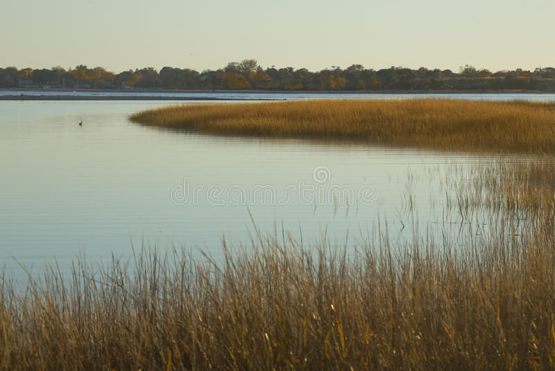 Sumpfgräser bei Sonnenuntergang im Fall bei Milford zeigen, Connecticut lizenzfreie stockfotos