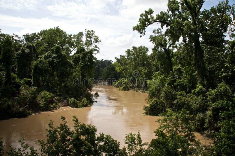 Sumpfiger Flussarm lizenzfreie stockbilder