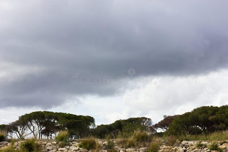 Sumpfkieferbäume unter einem stürmischen purpurroten Himmel mit Wolken stockbilder