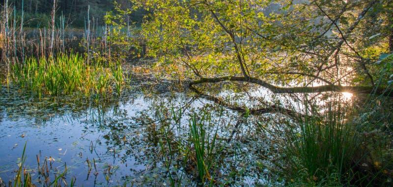 Sumpflandschaft an der Dämmerung stockfotografie