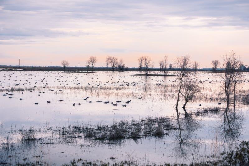 Sumpflandschaft, Kalifornien lizenzfreie stockbilder