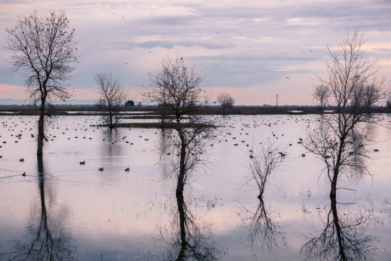 Sumpflandschaft, Kalifornien stockbild